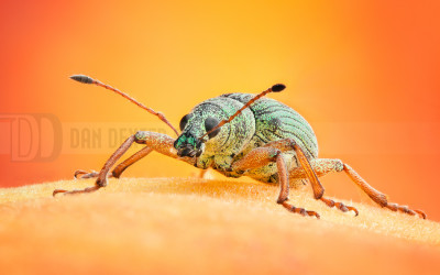 DanDexter-WeevilStack-2013-07-27-12.48.55 ZS retouched
